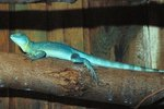 How to Prevent Insects in a Lizard Tank