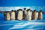 What Kinds of Penguins Live Near the South Pole?