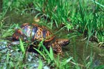 What Kinds of Turtles Live in Florida?