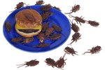 What Foods Most Attract Roaches
