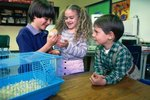 Ideas on Easy Classroom Pets