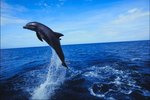 Dolphin Cruises for Children Near Destin, Florida