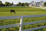 How Much Land is Legally Required for One Horse in Michigan?