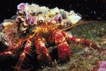 Relationship Between Hermit Crabs & Sea Anemones