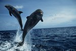 What Do Dolphins Love to Do?