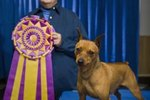 AKC Dog Shows in Sampson State Park