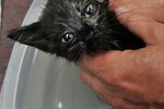 When Can You Give a Kitten a Flea Bath?