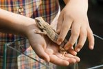 Ways to Play With a Bearded Dragon Lizard