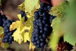 Hotels Close to Wineries in the Traverse City, MI Area