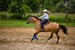 What Are Splint Boots on Horses Used For?