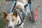 How to Make a Walking Sling for a Dog