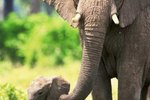 What Kind of Animals Do Elephants Interact With?