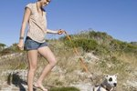 Pet-Friendly Lodging on St. George Island