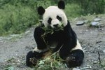 Chinese Endangered Species