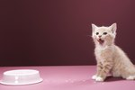 How to Help Cats Adjust to a New Kitten
