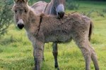 Young Donkey Care