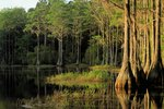 Florida Landforms & Natural Attractions