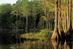 Ecological Tourism in Florida