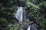 Tours of El Yunque in Puerto Rico