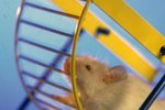 How to Attach a Hamster Wheel to a Cage