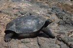 Cruises to the Galapagos Islands From Ecuador
