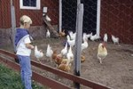 Different Kinds of Chicken Houses or Coops