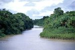 Scenery of the Amazon Rainforest