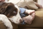 How to Treat Pododermatitis in Dogs