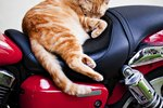 How to Keep Cats Off Motorcycle Seats