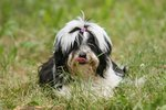 How to Control Grass Allergies in Dogs