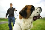 Food Facts for a Saint Bernard Puppy