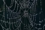 Does Silk Really Come from Spiders?