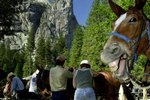 Horseback Riding in Yosemite Park