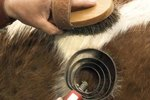 How to Disinfect Horse Combs and Brushes