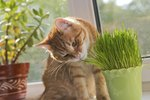 Why Does My Indoor Cat Keep Eating My Plants?