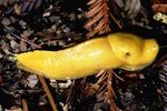 Are Slugs Poisonous to Humans?