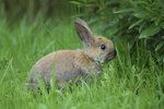 Muscle Spasms in Rabbits