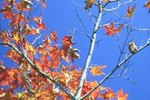 Places to Stay to View the Northeast Autumn Leaves
