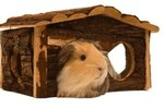 What Woods Are Safe When Building Guinea Pig Houses?