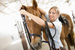 how to train a horse to trot
