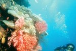 Costa Rica Scuba Diving Vacations