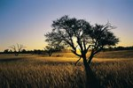 The Best Time to Visit the Kalahari Desert