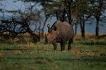 Where the Black Rhinoceros Lives