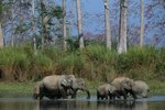 Forest Elephant Migration