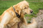 Treatments & Preventions of Fleas on Humans