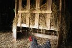 What Minimum Temperature Do Hens Need to Lay Eggs?