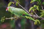 All Types of Conure Birds