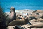 The Best Time to Visit the Elephant Seals in San Simeon, CA
