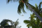 Pet Friendly Hotels Near Sunshine Beach, Florida