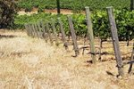 California Wine Country Walking Tours